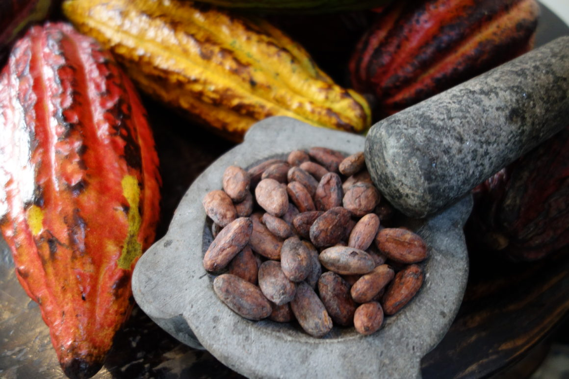 Firetree Chocolate factory cocoa beans